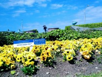 Morecambe BID helping Morecambe bloom